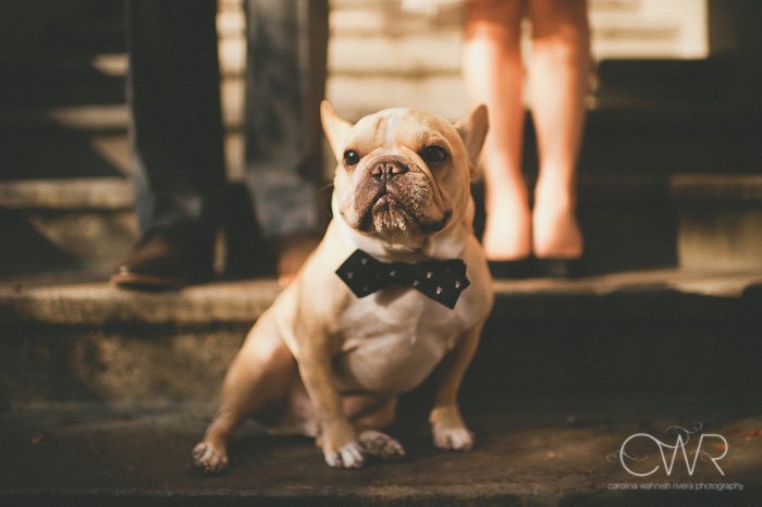 Boston engagement photos of couple with their french bull dog